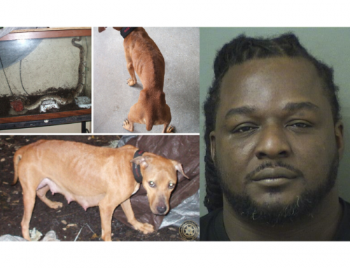 Boynton Beach man charged with felony cruelty to animals