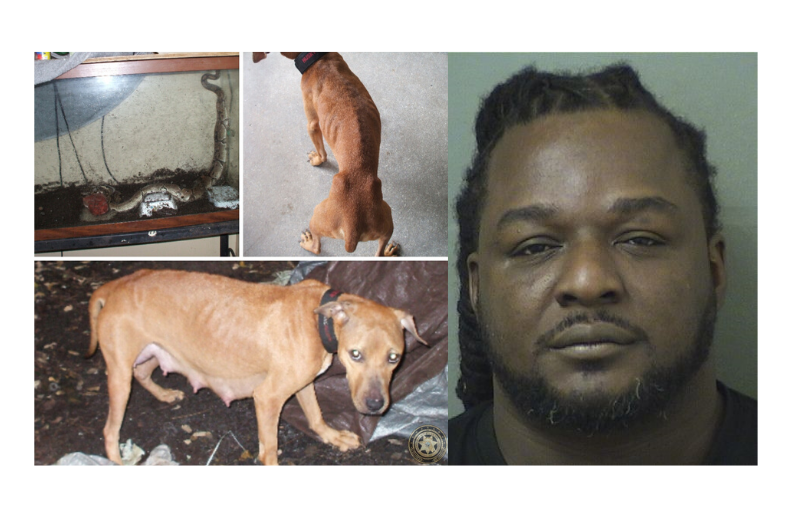 Mug shot of Tavarus Jackson and a dirty tank with a snake in it and an emaciated dog