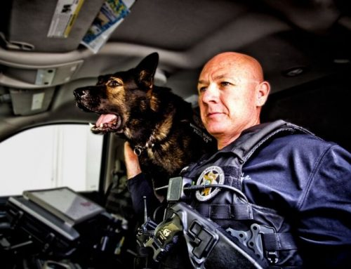 Passing of retired BBPD K9 Filip and K9 Duke